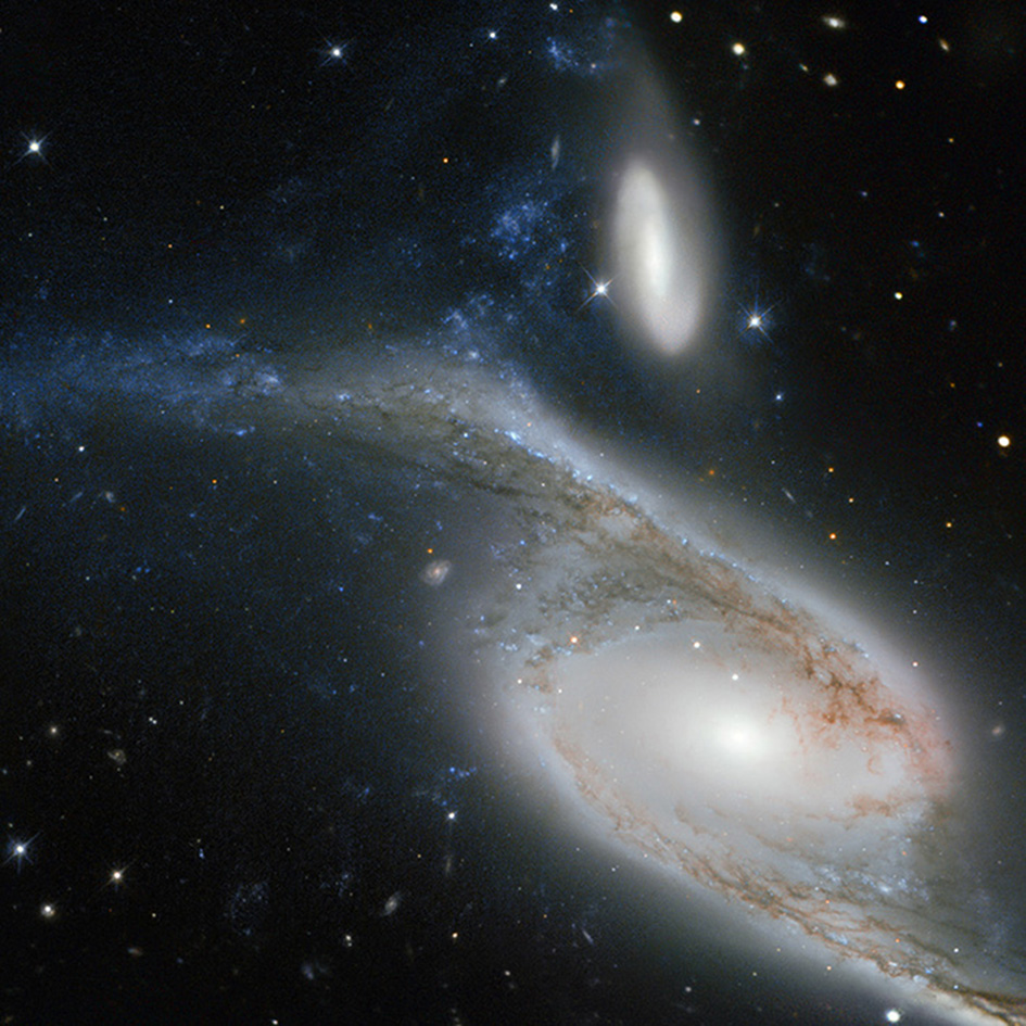 This picture, taken by the NASA/ESA Hubble Space Telescope's Wide Field Planetary Camera 2 (WFPC2), shows a galaxy known as NGC 6872 in the constellation of Pavo (The Peacock). Its unusual shape is caused by its interactions with the smaller galaxy that can be seen just above NGC 6872, called IC 4970. They both lie roughly 300 million light-years away from Earth. From tip to tip, NGC 6872 measures over 500 000 light-years across, making it the second largest spiral galaxy discovered to date. In terms of size it is beaten only by NGC 262, a galaxy that measures a mind-boggling 1.3 million light-years in diameter! To put that into perspective, our own galaxy, the Milky Way, measures between 100 000 and 120 000 light-years across, making NGC 6872 about five times its size. The upper left spiral arm of NGC 6872 is visibly distorted and is populated by star-forming regions, which appear blue on this image. This may have been be caused by IC 4970 recently passing through this arm — although here, recent means 130 million years ago! Astronomers have noted that NGC 6872 seems to be relatively sparse in terms of free hydrogen, which is the basis material for new stars, meaning that if it weren't for its interactions with IC 4970, NGC 6872 might not have been able to produce new bursts of star formation. A version of this image was entered into the Hubble's Hidden Treasures image processing competition by contestant Judy Schmidt.